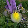 Jardin 2008 (13)