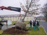 arbre_plantation