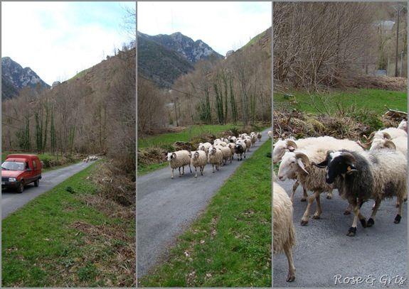 le retour à la bergerie pf