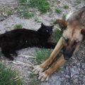 2009 05 24 Kapy et le chat