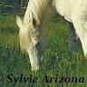 sylvie arizona