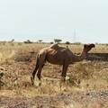006 - Sur la route entre Addis Abeba et Harar : Pays Afar