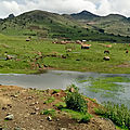 Bale mountain national park - oromia