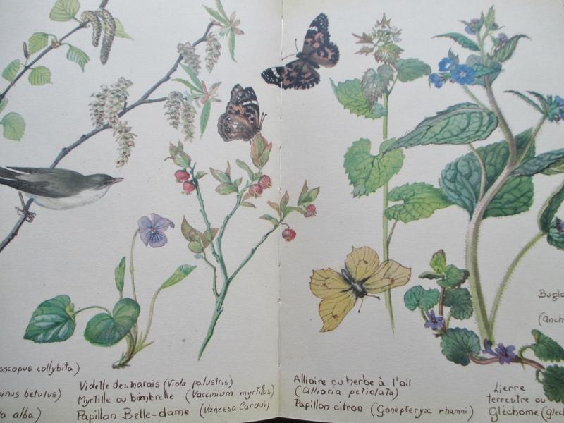 planche naturaliste- E. Holden