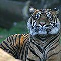 bz_30apr11_tigre3