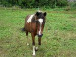 chevaux_07082011_002