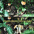 Hypholoma fasciculare