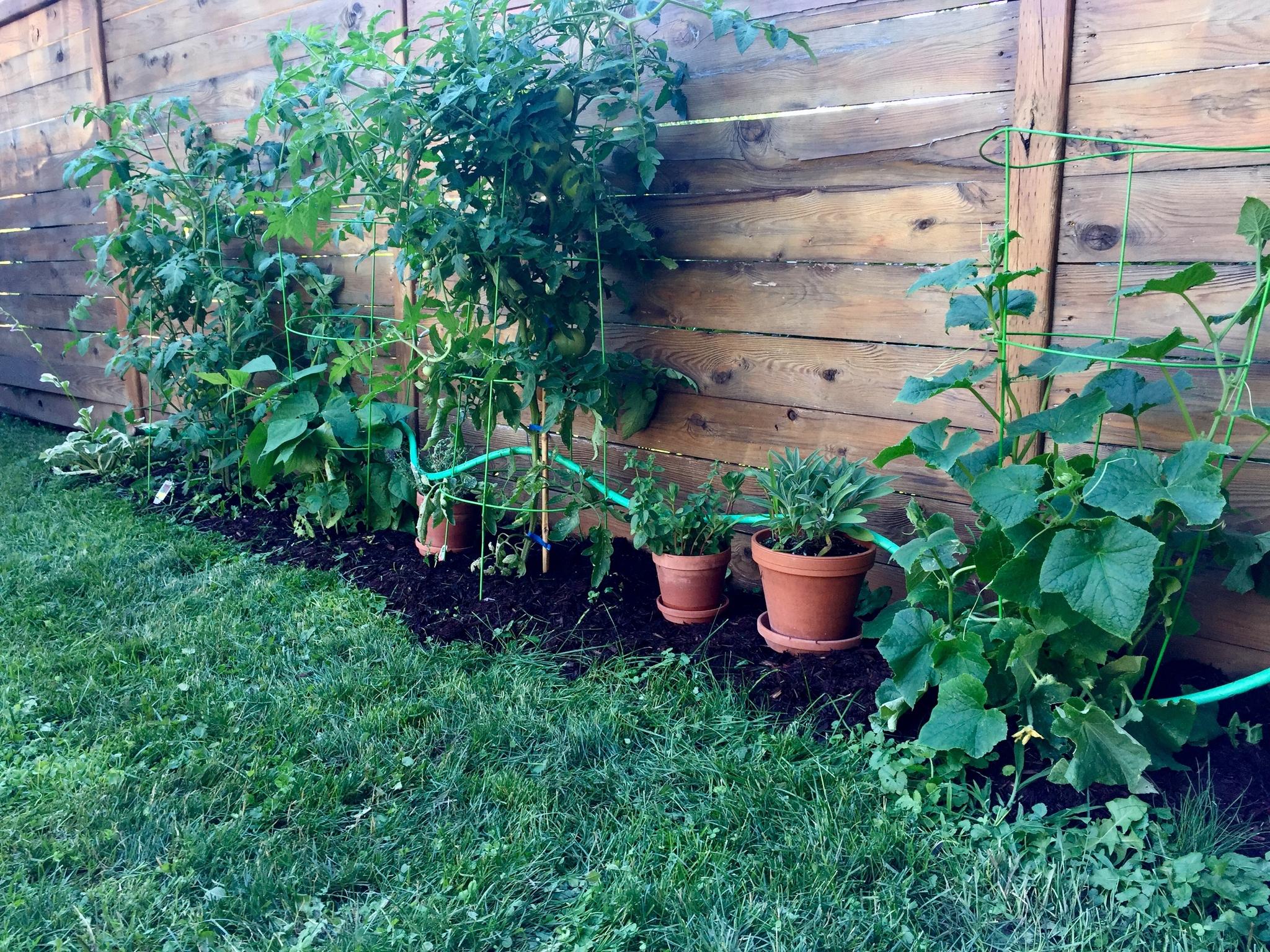 Comment Arroser Jardin Pendant Vacances comment faire survivre votre potager et vos tomates à vos
