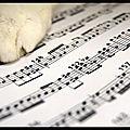 Les musiques apaisantes de rouky - ronronnements et musique - effervesciences