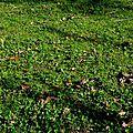 champignon-05911 (10)