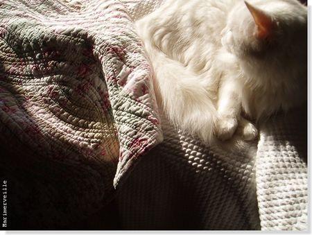 chat_blanc_sur_boutis