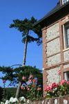 Sassetot Juillet 2011 364