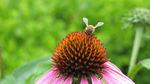 jardin_environnement_et_sant__abeille