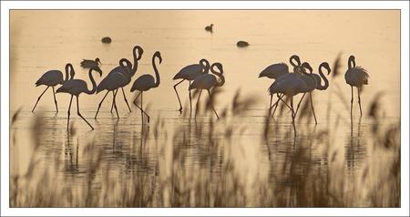 Delta Ebre lulu reserve matin flamants 042012