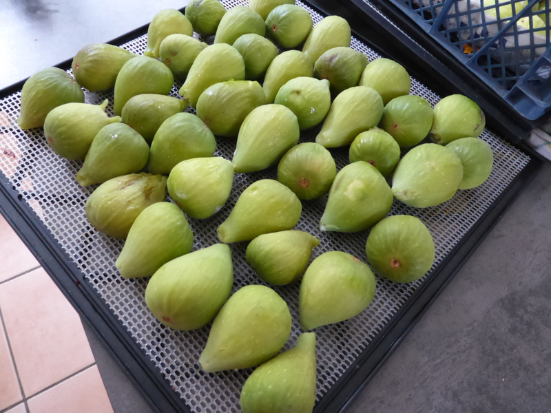 9-figues (2)
