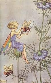 """Résultat de recherche d'images pour """"fairy nigelle"""""""