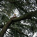 IMG_6772a