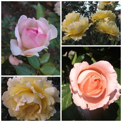 Fleurs du jardin (12)