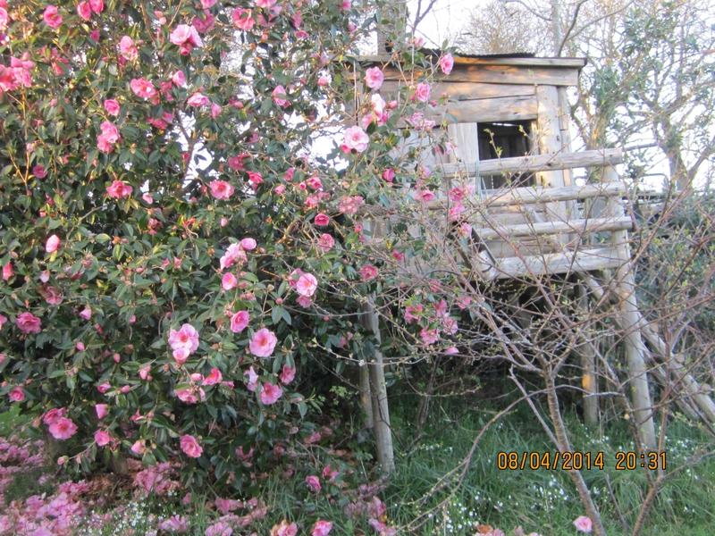 Fleures du jardin