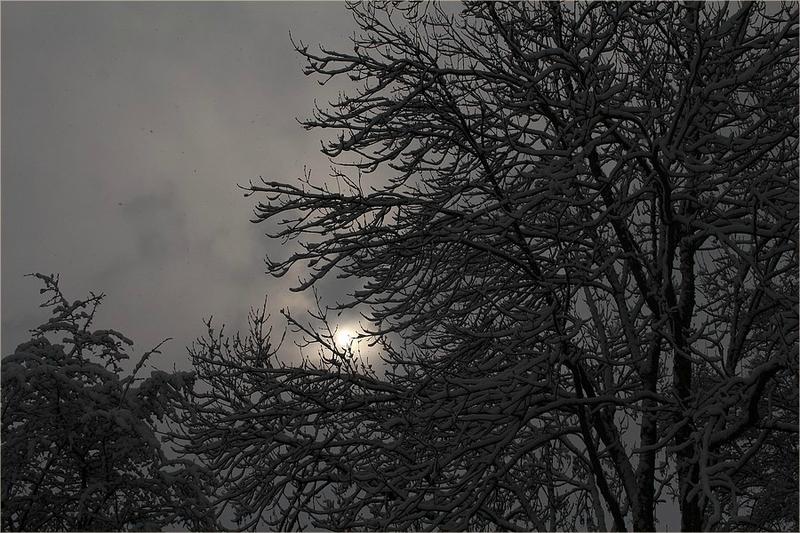 neige 203