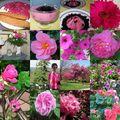 Mosaïque rose pour le mois de la sensibilisation au cancer du sein