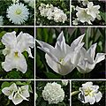 Open-Live-Writer/Juillet_EC5A/fleurs blanches_thumb