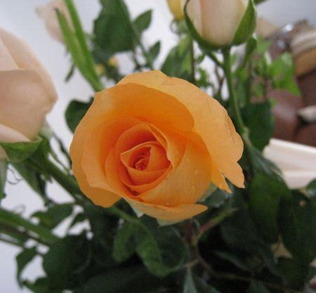 rose2010
