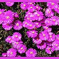 Fleurs de Léon 240418