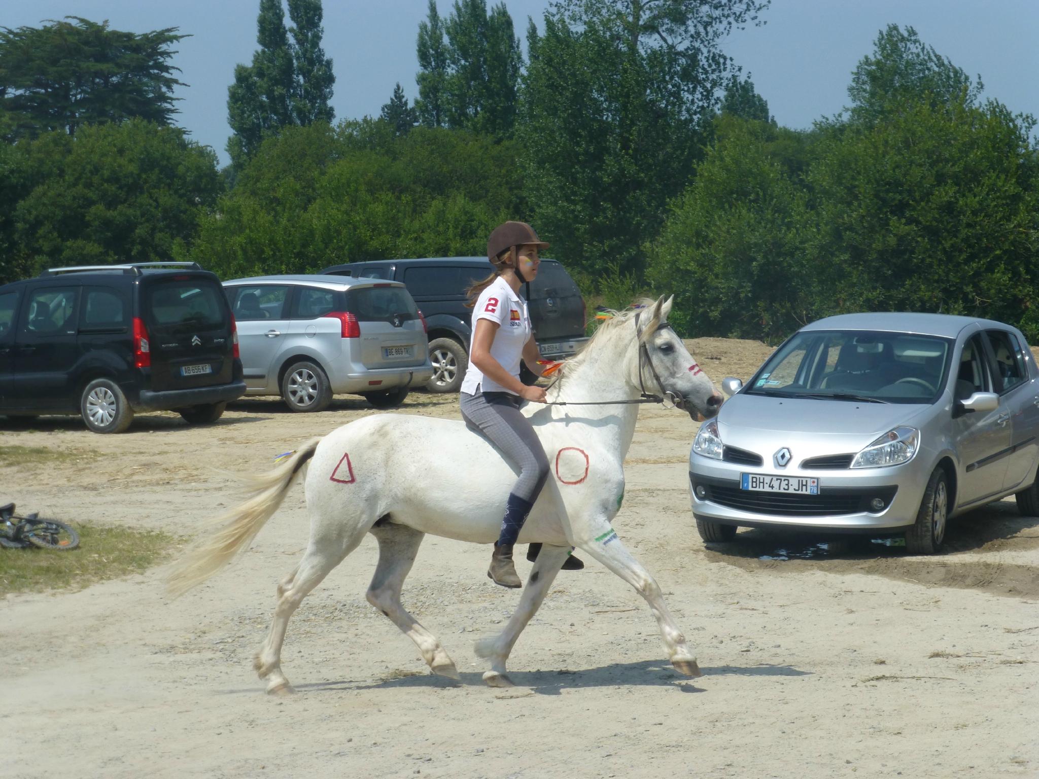 Jeux équestres manchots 2013 (181)