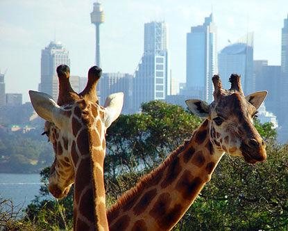 australia_taronga_zoo