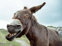 Privé de permis de conduire, il part travailler avec son âne