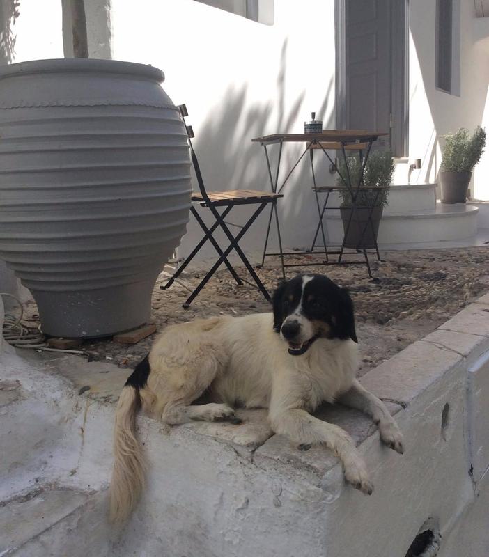 chien Mykonos_etsionjasait