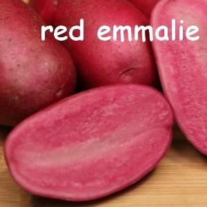 red emmalie
