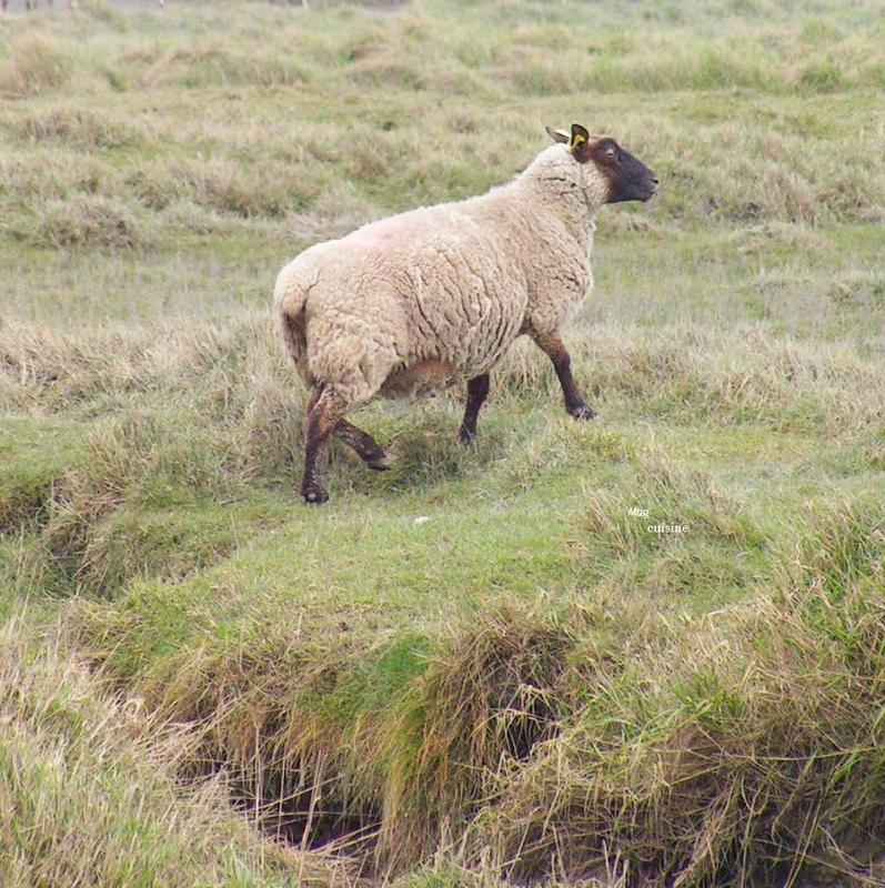 Stéphanie Maubet - éleveuse d'agneaux de prés-salés (4)