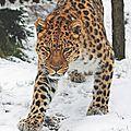 leopard_njp3b8Thub1r09wbpo1_540