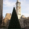 City Hall and Christmas Tree