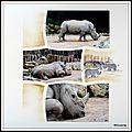 Pairi-daiza 2014 - rhinocéros