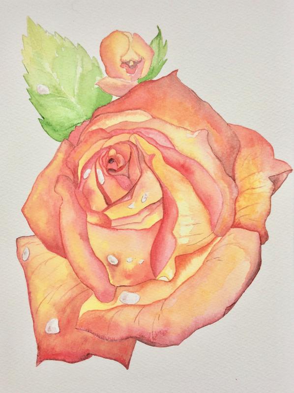 Isabelle De Vriese rose