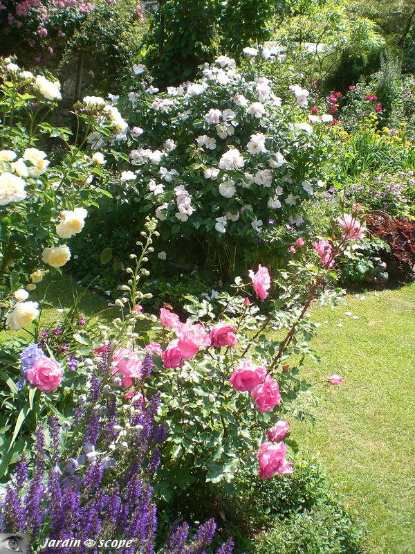 Scène à reproduire……dans votre jardin !