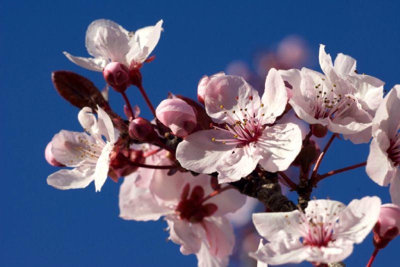 Une Petite Selection A La Fleur De Prunier Plum Blossom