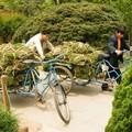pelouse prête à l'emploi