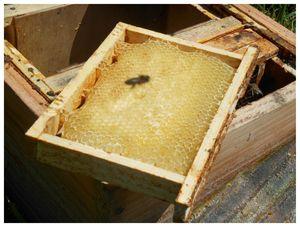 abeilles3 003