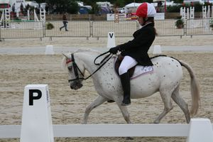 dressage et cross 034
