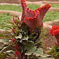 jardin du fort rouge, Agra