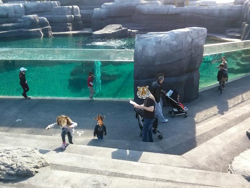 Bassin des (futures) otaries ©KF