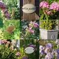 jardin 12 mai