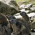 05 Les Marmottes (73)