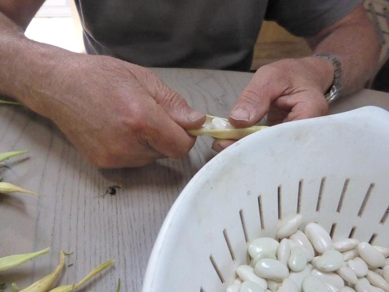 20-haricots tarbais (4)