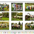Multicolore safari montbéliard