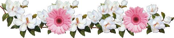 Gif Barre séparation Gerberas roses et fleurs blanches 577 pixels